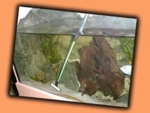 Tetra GS45 im Aquarium
